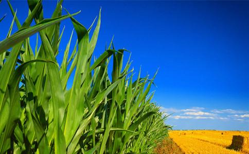 2020年河北公務員考試常識積累:農作物介紹