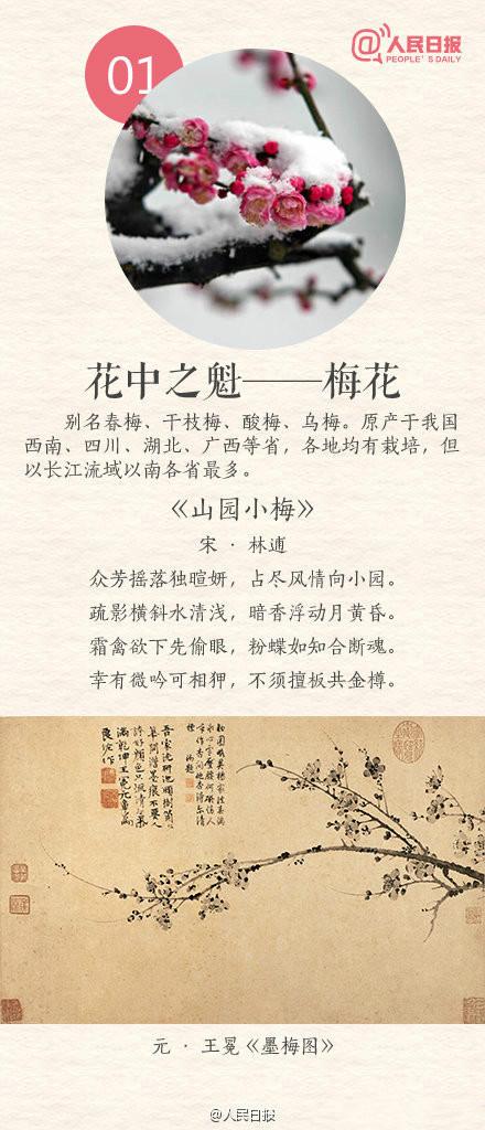 常识积存:k8凯发传统十大名花