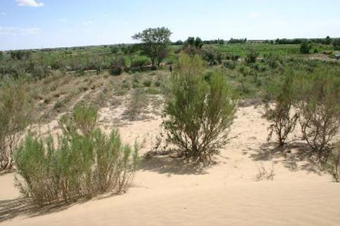 申论热点:防治土地荒漠化