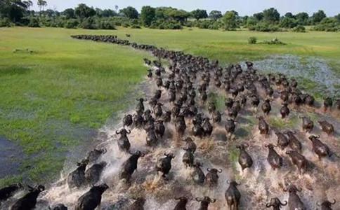 常識積累:動物遷徙