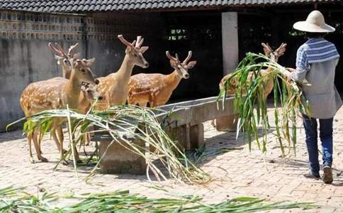 申论热点:禁食野生动物要避免误伤养殖业